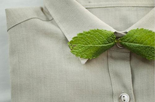 fliege Minze flohsamenschalen ghee glossar avocadooo ernährungscoaching
