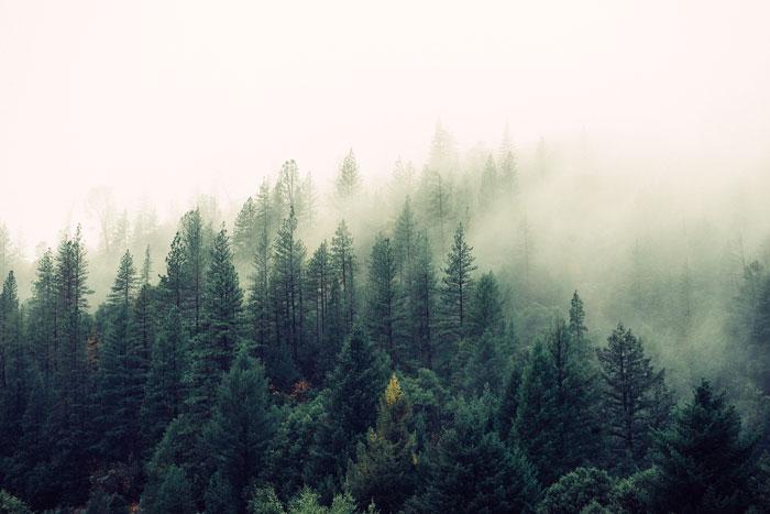 Nebel Migräne