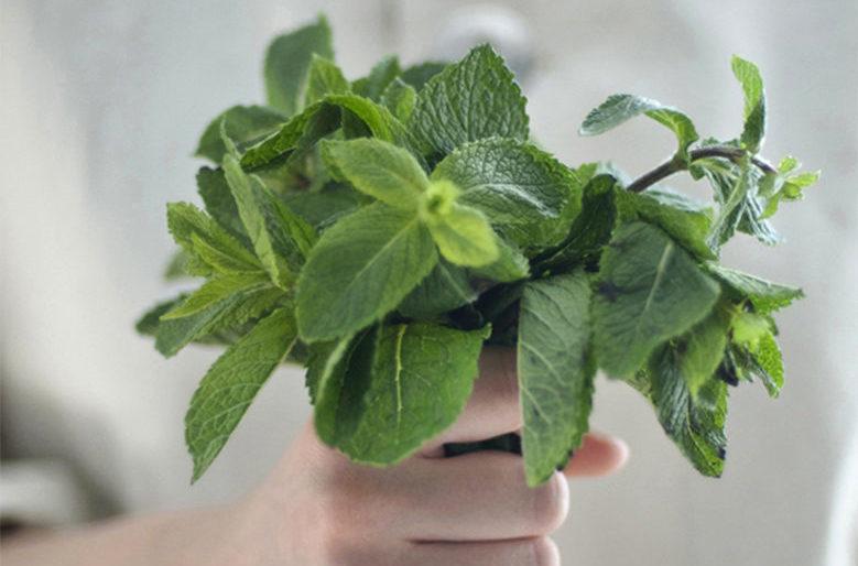 Minze Strauß Migräne Ernährung avocadooo Vortrag gesund